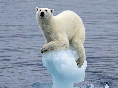 Réflexions bouddhistes sur le changement climatique (Revue AZI – Fév 2016)