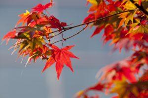 Découvrir la méditation zen - Porter un regard neuf sur sa vie