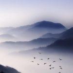 """Matinée """"Commémoration de l'Eveil du Bouddha"""" (Rohatsu)"""